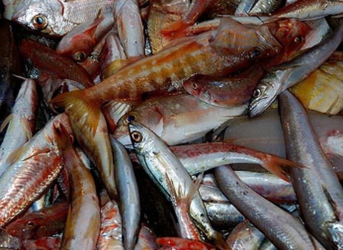 Quando i pesci di Napoli facevano la rivoluzione