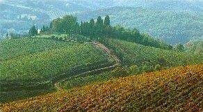 Approvate le piattaforme di rinnovo dei Ccnl cooperative agricole e forestali