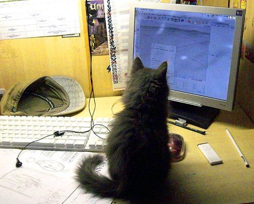 Il cervello dei gatti migliore dei super computer