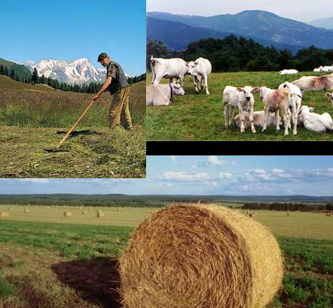 Finanziaria agricola: il governo segua l'esempio degli altri paesi europei