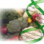 Ecco G-diet, la dieta a misura di DNA