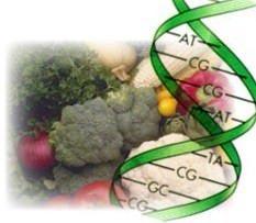 Arriva il codice a barre del DNA contro le frodi alimentari