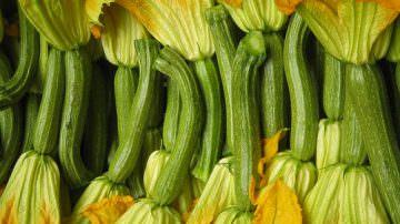 Friuli Venezia Giulia: Al via le visite di confronto sulle varietà dello zucchino