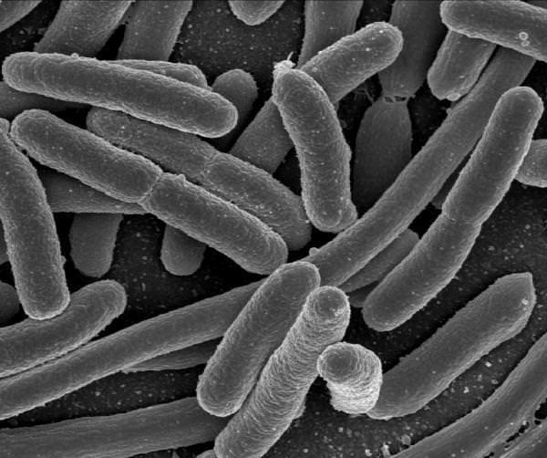 Usa: Nasce il Biocircuito, il primo circuito vivente