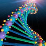 Completata la decodifica del genoma del mais