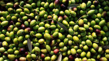 Contro lo scarico abusivo dei residui della molitura delle olive, scendono in campo Corpo Forestale e Acquedotto di Puglia