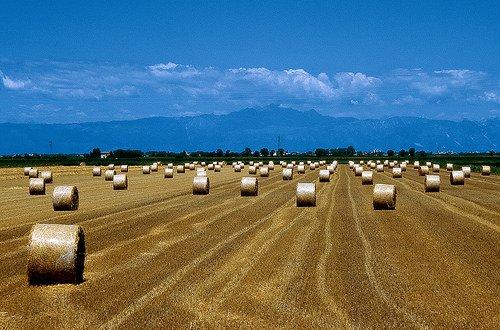 """Agricoltura: Galan, bisogna saper distinguere tra """"le emergenze, le pressioni e le vere priorità"""""""