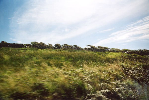 Maltempo: Confagricoltura, danni in agricoltura per il vento forte