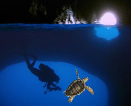 Due tartarughe Caretta-caretta saranno liberate nella Grotta Azzurra di Capri