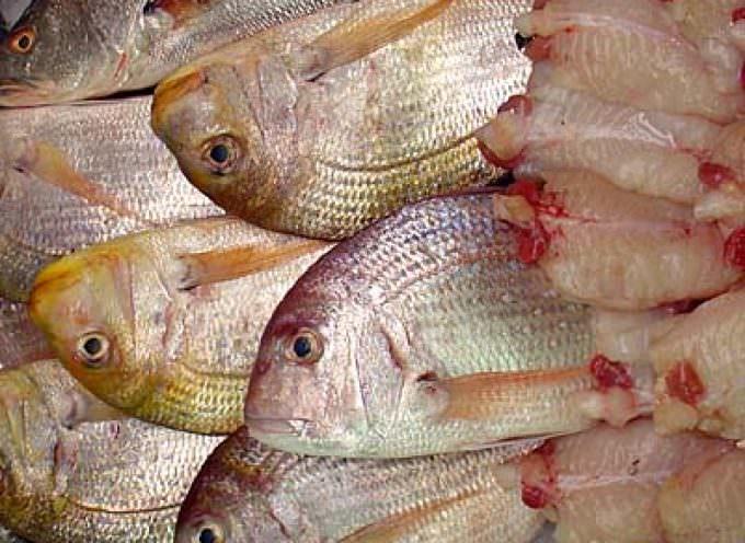 Manovra: Il settore pesca deluso, meritiamo un'attenzione maggiore
