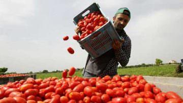 Pomodori convenienti? Attenzione allo sfruttamento degli immigrati