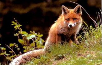 Friuli Venezia Giulia: Nuove misure in campo contro la rabbia silvestre