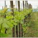 2050, addio al vino europeo: temperature troppo alte