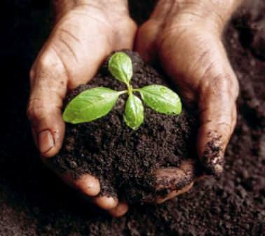 Agricoltura di qualità: Una buona insalata nasce anche dai rifiuti