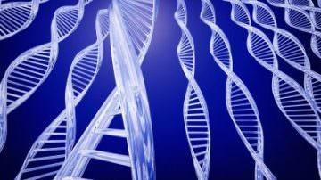 Uomini: scoperto Tospeak, il gene della parola