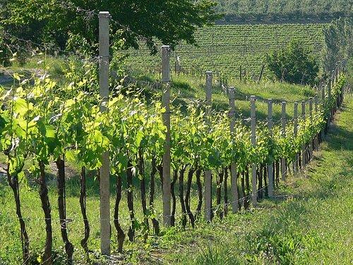 Rovereto: Dedicata al Marzemino la II tornata dell'Accademia Italiana della Vite e del Vino