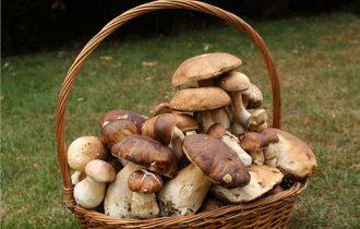 CocoFungo 2012: Il fungo parla francese, tedesco, inglese…
