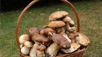 """Spoleto (PG): Passeggiata per le campagne con """"Spuntano come funghi…"""""""