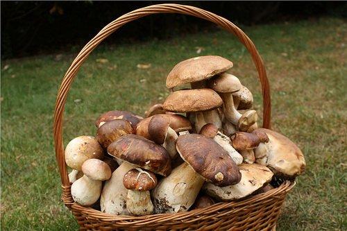 Funghi: Consigli per la raccolta