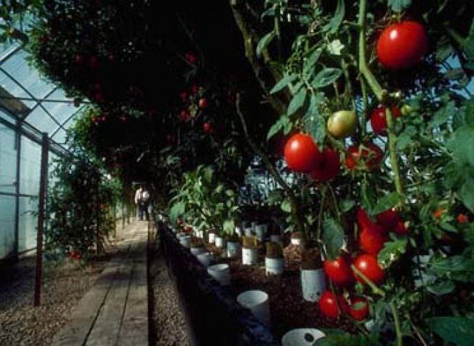 Agricoltura: ok all'intervento del ministero per la conferma dell'esenzione dell'accisa sul gasolio per le serre