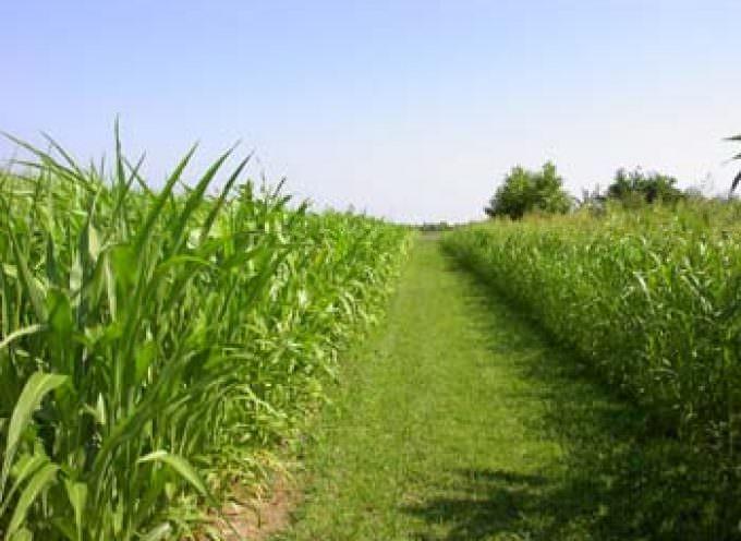 Annata agraria 2009: crolla la produzione, costi alle stelle, prezzi sui campi in picchiata, meno investimenti e redditi tagliati