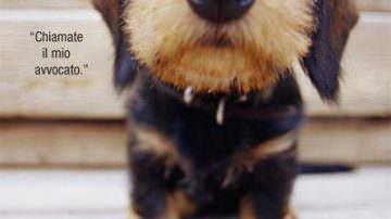 """Un emendamento per reintrodurre il taglio della coda ai cani. L'Enpa: """"Rispettare le ordinanze Martini"""""""
