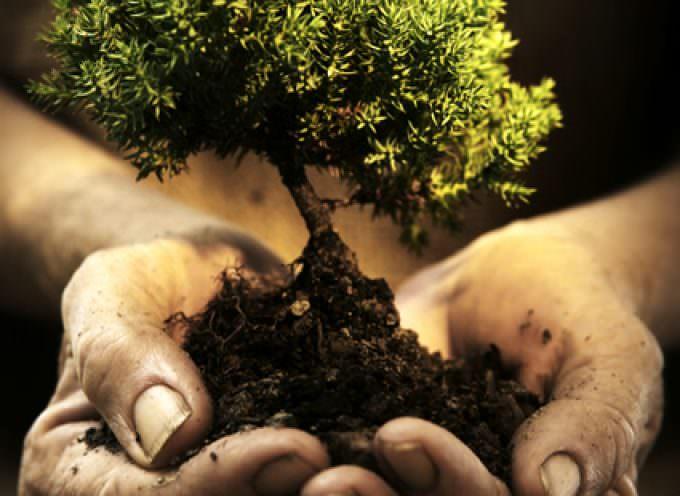 In Gran Bretagna alberi finti contro la CO2