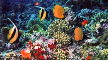 Oceana avverte che le emissioni di CO2 stanno causando l'estinzione di coralli e crostacei a seguito dell'aumento di acidità delle acque