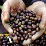 L'agricoltura biologica combatte il riscaldamento globale