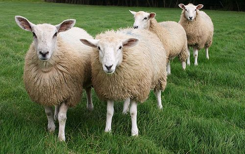 Protesta dei Pastori: In 10 anni chiuso il 30% degli allevamenti