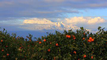 Arance: Acquistiamole senza intermediari direttamente dal produttore in Sicilia