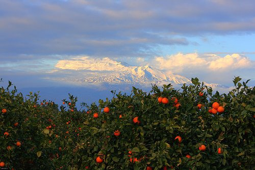 Arance Rosse: Acquistiamole senza intermediari direttamente dal produttore in Sicilia