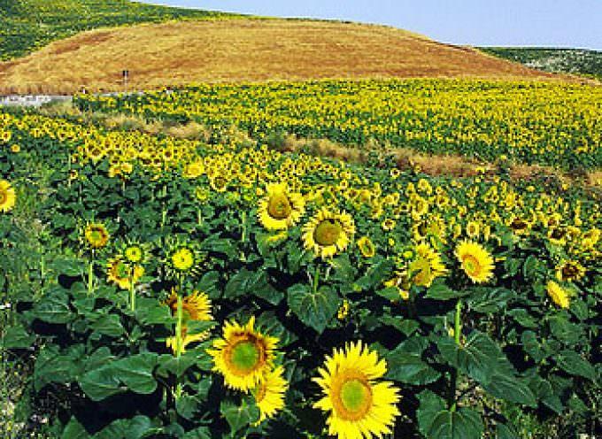 Tutela biodiversità – Viti illustra le azioni della Regione Basilicata
