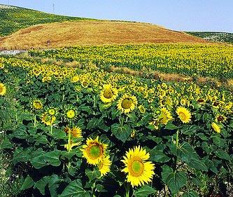 Agricoltura: Per uscire dalla crisi servono proposte comuni ed un clima di condivisione