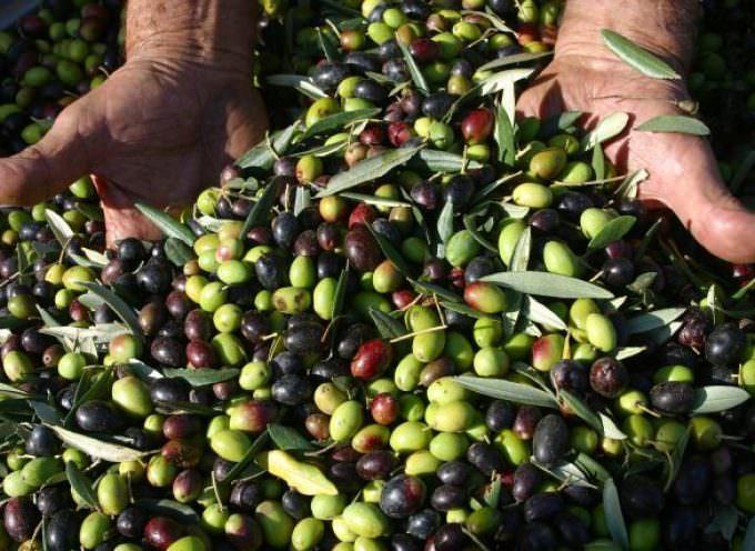 Imperia, due giorni con l'extravergine d'oliva