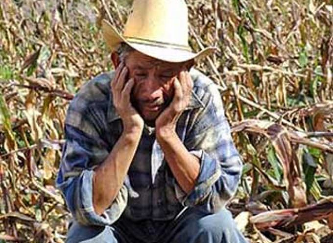Economia: La crisi agricola non accenna a demordere
