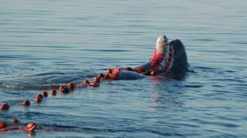 Fao: Firmato un trattato innovativo contro la pesca illegale