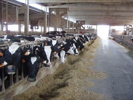 Benito Mantovani, Nutrizionista Zootecnico: Etichettatura della carne bovina
