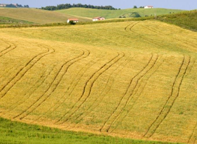 Agricoltura: Allarme deflazione dei prezzi sui campi!