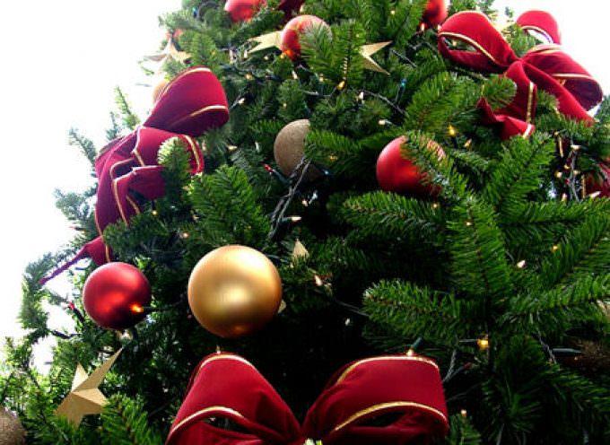 """Natale: l'albero """"vero"""" non rincara"""