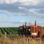 Cipolle, patate e carote biologiche non hanno più antiossidanti di quelle coltivate tradizionalmente