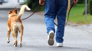 Sport: portare a passeggio il cane è meglio della palestra