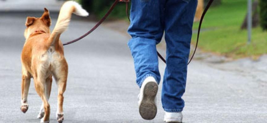 Portare il cane a passeggio secondo la legge