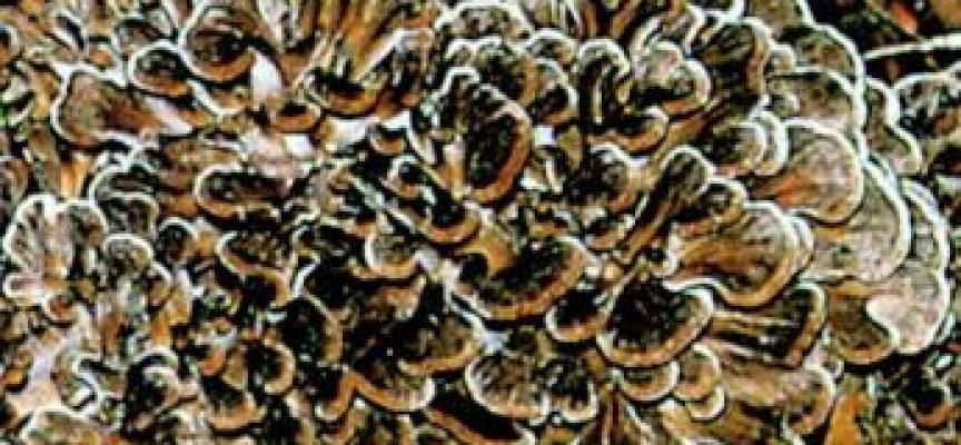 Deformazione di ununghia dopo un fungo