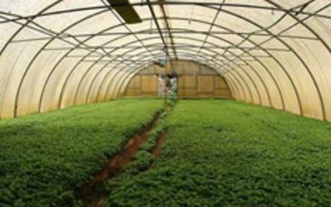 """""""Bonus serre"""": anche l'Assopetroli a fianco degli agricoltori"""