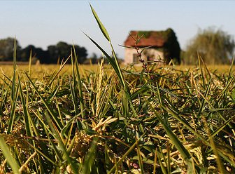 """Vercelli: """"Gestione sostenibile delle piante infestanti del riso"""""""