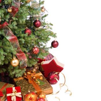 Perchè solo abeti a Natale? Ad ogni zona climatica l'albero giusto