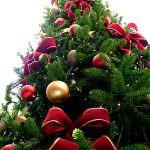 Natale anticrisi? Sotto l'albero prodotti a Km zero