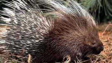 Cantieri della Biodiversità: Worhshop a Siena sulla conservazione della fauna selvatica