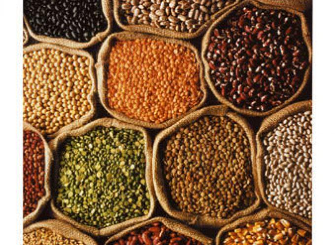 Fao: I prezzi dei cereali aumentano, ma siamo preparati